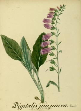Flore de l'Aude (France, 189?)