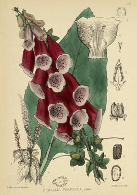 Medicinal plants...(Londres, 1880)