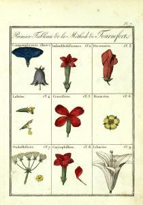 J. Roques, Plantes usuelles, indigènes et exotiques... Paris, 1807-1808 (BU Santé AJG, UT3PS, Res Sc 105012)