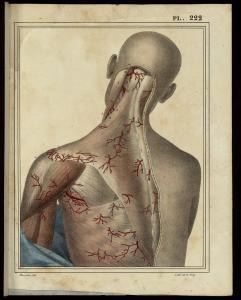 J-G. Cloquet, Manuel d'anatomie descriptive du corps humain... Paris, 1825 (BU Santé AJG, UT3PS, Res Med XIX B 105598)