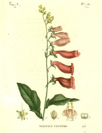 Plantes de la France...(Paris, 1819-1822)