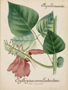 A. Py,Flore des Antilles, fin du XIXe siècle (BU Arsenal, UT1C, Ms 199178)